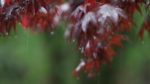 Rain falls upon autumn leaves Stock Video Footage