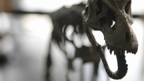 Dinosaur skeleton in a museum Stock Video Footage