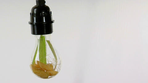 A light bulb contains corn husks Stock Video Footage