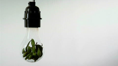 A light bulb contains soy bean pods Stock Video Footage