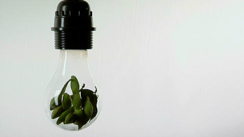A light bulb contains soy bean pods Footage