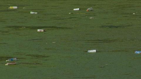 Bottles float in a waterway full of algae Stock Video Footage