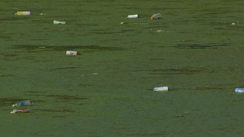 Bottles float in a waterway full of algae Footage