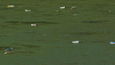 Bottles float in a waterway full of algae Stock Video Footage