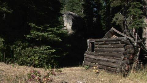 The remains of a log cabin stand in a wooded area Stock Video Footage