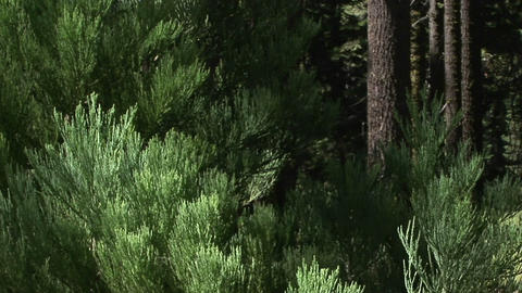Tree branches wave in the breeze Stock Video Footage