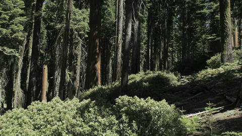 Trees cast shadows in time lapse in a forest Stock Video Footage
