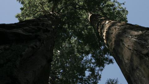 Shadows move over tree trunks in a forest Stock Video Footage