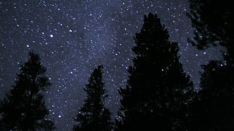 Stars sparkle over silhouetted trees Stock Video Footage