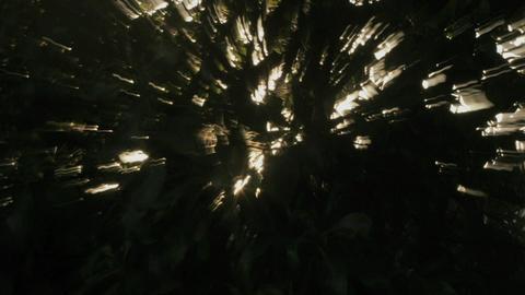 The sun filtering through treetops vibrates Stock Video Footage