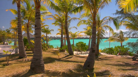 Tahitian palm trees gently blow in the wind with turquoise water in the background Footage