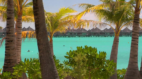 Tahitian palm trees blow in the wind with turquoise water... Stock Video Footage