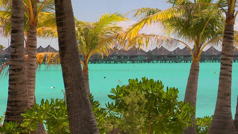 Tahitian palm trees blow in the wind with turquoise water and huts in the background Footage