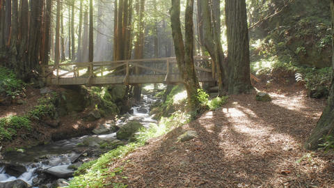 Time lapse of a family walking in the forest at Limekiln... Stock Video Footage