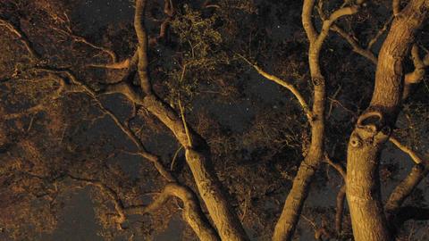 Night time lapse of startrails through an oak tree in Oak... Stock Video Footage