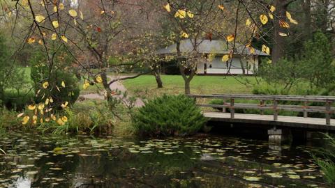 autumn in japanese garden Stock Video Footage