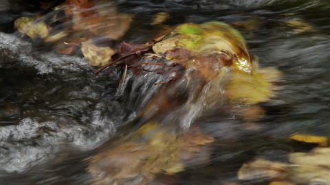 autumn stream Stock Video Footage