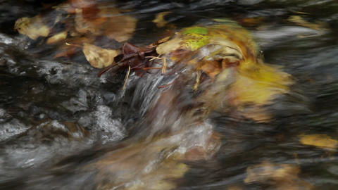 autumn stream Footage