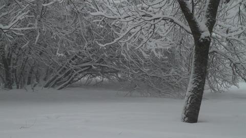 blizzard Footage