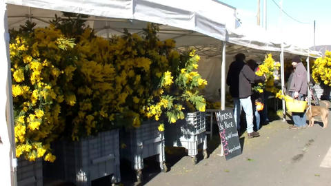 Mimosa Footage