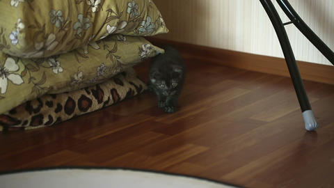 Sneaking kitten Footage