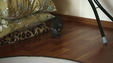 Sneaking kitten Stock Video Footage