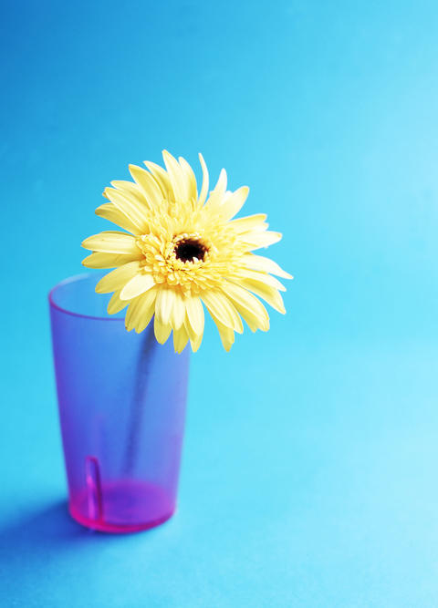 Daisy flower in drinking glass