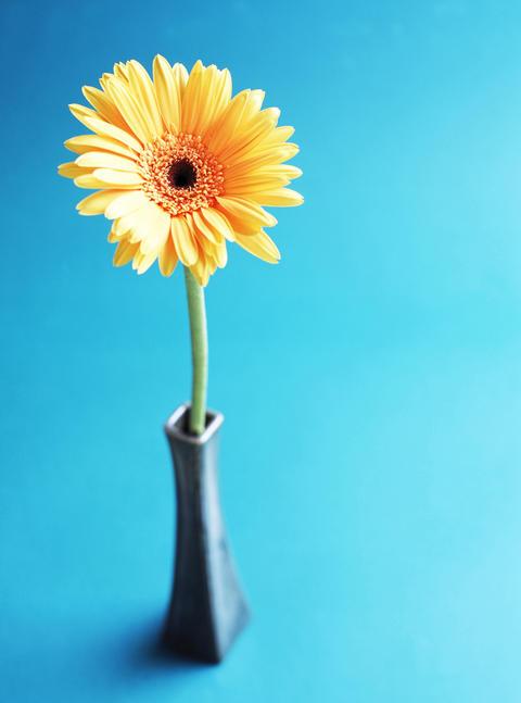 daisy flower in vase ภาพถ่าย