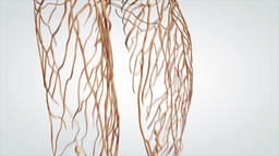 3D Animated Model Rotating Human Nervous System Live Action