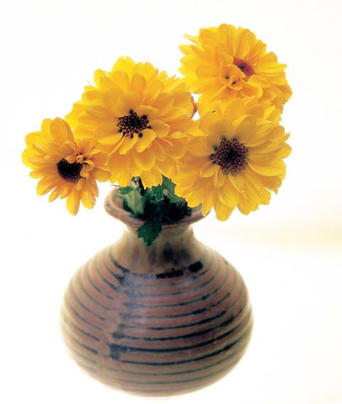 Daisy flowers in vase 사진
