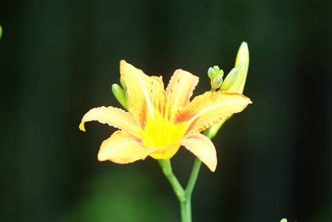 Close up of single flower