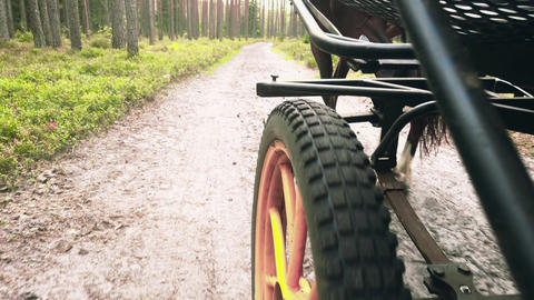 Close-up of a cart wheel on a forest road, on an open road without people Live Action