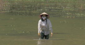 Vietnamese woman finishing work of cleaning water from weed Footage