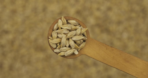 Barley grains in a spoon. Refocusing from a spoonful of grain to a pile of grain Live Action