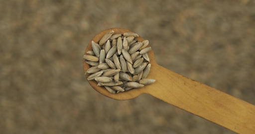 Rye grains in a spoon. Refocusing from a spoonful of grain to a pile of grain Live Action