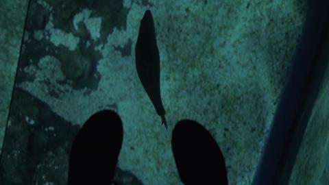 Sea animal swimming under glass floor in oceanarium Footage