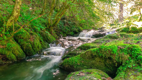 Time lapse of mountain stream flowing over rocks in forest Footage