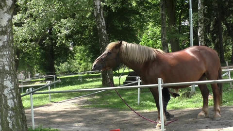 Brushing the horse after a ride Footage