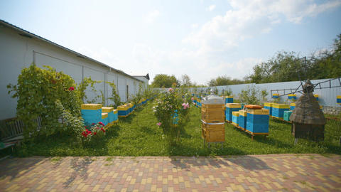 Great Apiary. Industrial beekeeping with honey bees Live Action