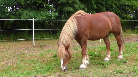 Brown horse in a meadow Footage