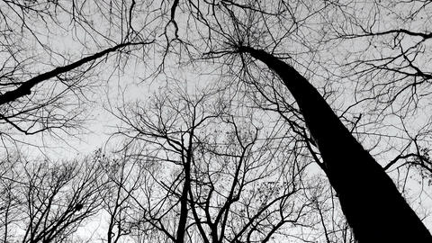 scary black and white trees in winter Footage