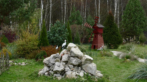 Countryside landscape with windmill, birds and fur trees Live Action