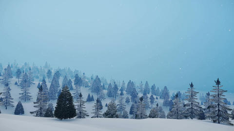 Snowy winter fir forest at slight snowfall Animation
