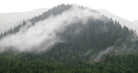 Rain and cloud on the background of Tien Shan spruces. Issyk Kul, Kyrgyzstan Footage