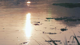 Dusk lake floating garbage Footage