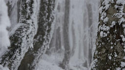 Zoom out in a winter-snow covered forest on a foggy day Footage