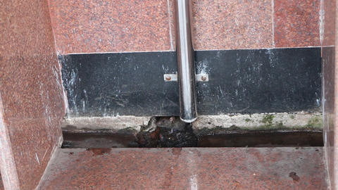 Black rat in station toilet. India Footage
