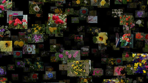 Photo stream of flowers, seamless loop Animation