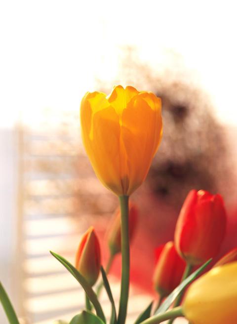 Close up of flower フォト