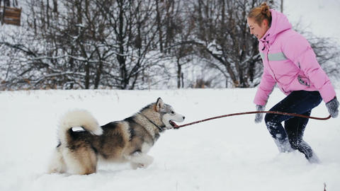 Winter Playing With Pet GIF